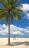 Palm Tree Beach Stock Photo