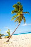 Palm tree at the beach Royalty Free Stock Images