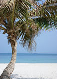Palm tree on beach Stock Photos