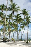 Palm tree on the beach. Exotic coconut palm tree on the beach Stock Photography