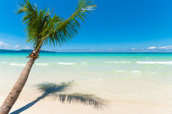 Palm tree on beach Royalty Free Stock Images