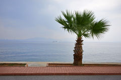Palm tree on the beach Stock Photos