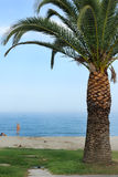 Palm tree with beach Stock Image