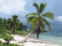 Palm Tree on a Beach. A palm tree on a beach in the Florida Keys with a storm coming in Stock Photography