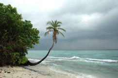 Palm tree at the beach. Wide angle view of a palm tree within a tropical sandy beach Royalty Free Stock Photos