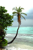 Palm tree on beach. Dharavadhoo beach with cloudscape, a palm tree and crystal clear water Royalty Free Stock Photography