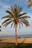 Palm tree on beach. Palm tree on the beach Royalty Free Stock Photography