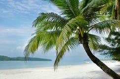 Palm tree on beach. Palm tree on sand beach Royalty Free Stock Photo