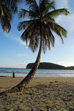 Palm tree and beach. Palm tree on sandy beach with ocean and island and blue sky stock image