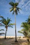 Palm tree on a beach Stock Image