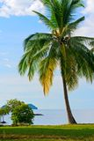 Palm tree on the beach Royalty Free Stock Photos