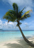 Palm tree on a beach Stock Photo