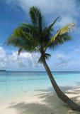 Palm tree on a beach stock photo