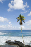 Palm tree on beach, Stock Image