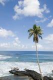 Palm tree on beach, Stock Image