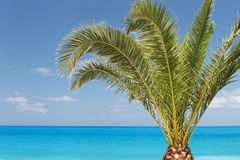 Palm tree on beach against sea and sky Stock Image