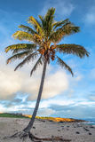 Palm tree. On the beach of Anakena, Easter Island (Rapa Nui), Chile Royalty Free Stock Image