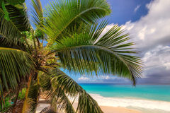 Palm tree on a beach on  Anse Lazio, Praslin on the Seychelles. Palm tree on beautiful tropical beach Anse Lazio, Praslin on the Seychelles Stock Photography