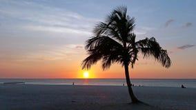 Palm tree on the beach on Aruba island at sunset. Palm tree on the beach on Aruba island in the Caribbean at sunset Royalty Free Stock Photo