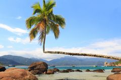 Palm tree on beach Aventueiro, Ilha Grande, Brazil Royalty Free Stock Photography