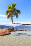 Palm tree on beach Aventueiro of island Ilha Grande Stock Images