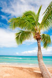 Palm Tree Beach Background Royalty Free Stock Photos