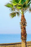 Palm tree on the beach Stock Photography
