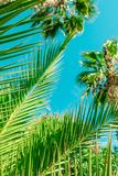 Palm tree beach background, summertime travel royalty free stock photos