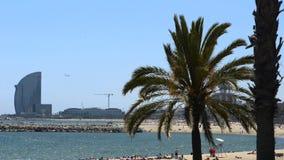 Palm tree on the beach of Barcelona. Palm tree swaying in the wind on the beach of Barcelona stock video