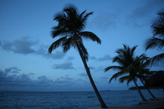 Palm tree in the beach royalty free stock photos