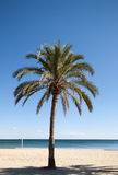 Palm tree on beach. On a beautiful day stock images