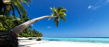Palm tree beach Stock Photos