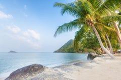 Palm tree and beach on a beautiful tropical island. Stock Photos