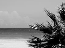 Palm tree on the beach in black and white Stock Photos