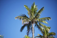 Palm Tree. On the beach during bright day Royalty Free Stock Photo