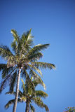 Palm Tree. On the beach during bright day Royalty Free Stock Images