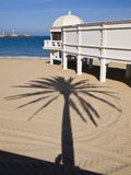 A palm tree on the beach of Caleta. A palm in the Caleta beach in the foreground is part of Balneario de la Palma and bottom Cadiz Lighthouse, located in the Stock Photo