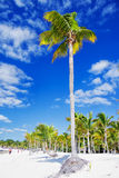 Palm tree. On the beach of the Caribbean Royalty Free Stock Photos