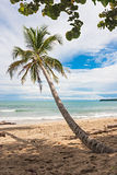 Palm Tree. On a beach in the caribbean. Puerto Viejo, Costa Rica stock image