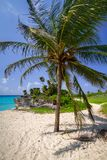 Beach at Caribbean sea in Playa del Carmen. Palm tree at the beach of Caribbean sea in Mexico Royalty Free Stock Photos