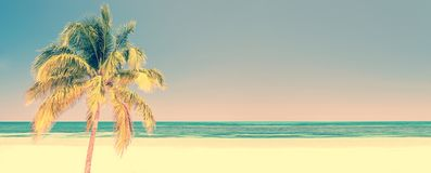 Palm tree on a beach in Cayo Levisa Cuba, panoramic background with copy space, vintage travel concept. Palm tree on a beach in Cayo Levisa Cuba, panoramic royalty free stock images