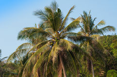 Palm Tree on Beach Royalty Free Stock Photography