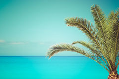 Palm tree on the beach, close up. Palm tree on the beach by the sea.  Retro color style, blank space Royalty Free Stock Photos