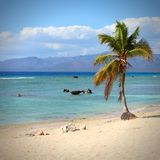 Palm tree beach. Cuba - famous Playa Ancon beach. Caribbean seaside destination Stock Photos