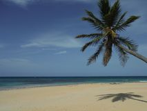 Palm tree. Beach in the Dominican Stock Photography
