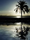 Palm tree on beach at dusk, night sunset. Beautiful palm tree reflection on beach at dusk Royalty Free Stock Photography
