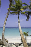 Beautiful beach with palm tree Royalty Free Stock Images