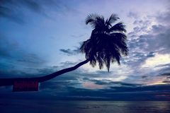 Palm tree on the beach with hanging sign stock images