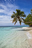 Palm tree on the beach. Palm tree hangs over the water on the beach in Maldives stock photos