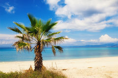 Palm tree on a beach in Hanioti, Greece Stock Photos